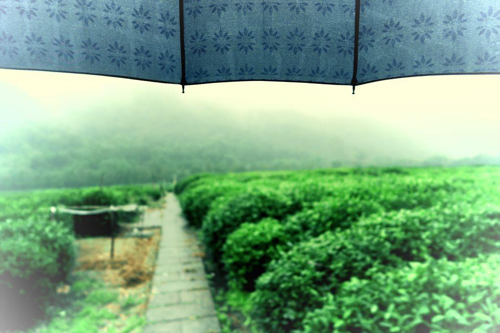 Le thé, une religion en Chine