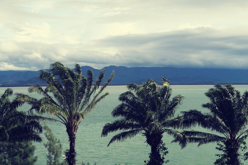Palmiers de Kawthong