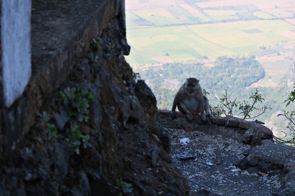 Monsieur le singe